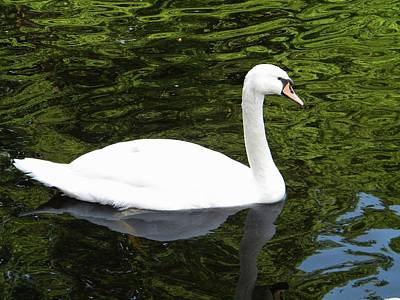 Art Print featuring the photograph Swan by Manuela Constantin