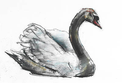 Swan Drawing - Swan by Mark Adlington