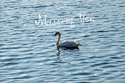 Photograph - Swan Miss You by Aimee L Maher Photography and Art Visit ALMGallerydotcom