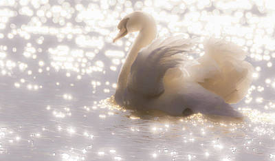 Photograph - Swan Of The Glittery Early Evening by Will Bailey