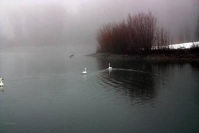 Photograph - Swan Pond by Rick Thiemke