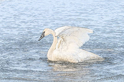 Photograph - Swan Profile - Photo Sketch by Patti Deters