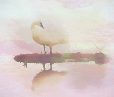 Painting - Swan Reflection by Dan Sproul
