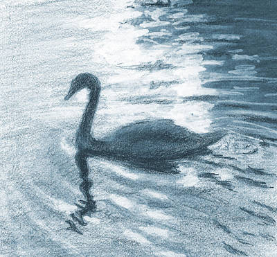 Still Life Drawings - Swan by Sarah Parks
