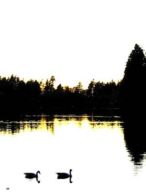 Photograph - Swan Silhouette by Will Borden