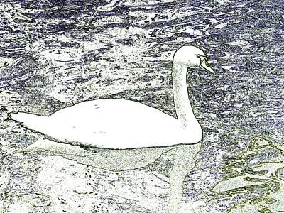 Art Print featuring the photograph Swan Sketch by Manuela Constantin