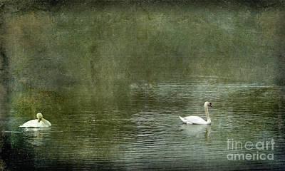 Photograph - Swan Song by Liz Alderdice