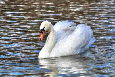Photograph - Swan Song Painting by Carol Montoya