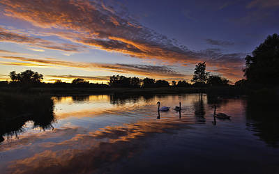 Photograph - Swan Sunset by Ian Merton