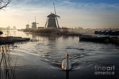 Photograph - Swan Swimming In A Stream In A Winter Landscape by IPics Photography