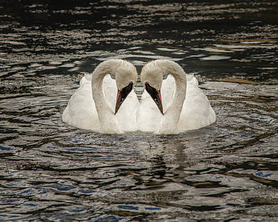 Art Print featuring the photograph Swan Times Two by Mary Hone
