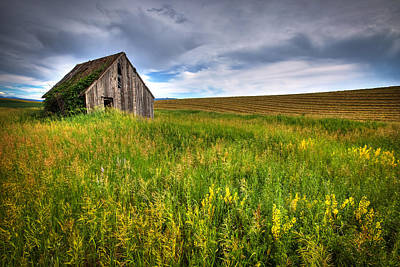 Fields Of Gold Photograph - Swan Valley by Ryan Smith