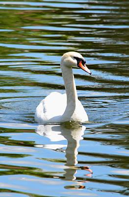 Stratford Photograph - Swan Vista by Richard Andrews