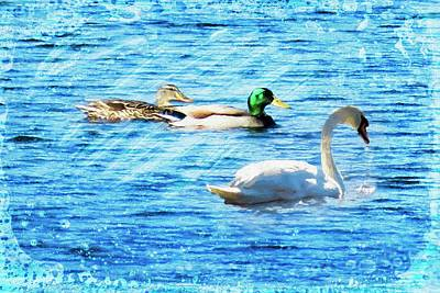 Digital Art - Swan With Two Mallards. by Rusty R Smith