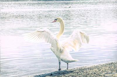 Photograph - Swan Yoga by Steph Gabler