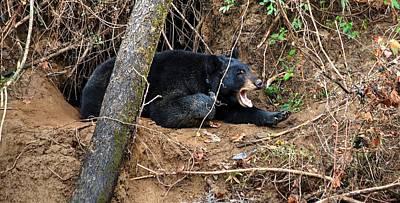 Photograph - Swannanoa Bear by Carol Montoya