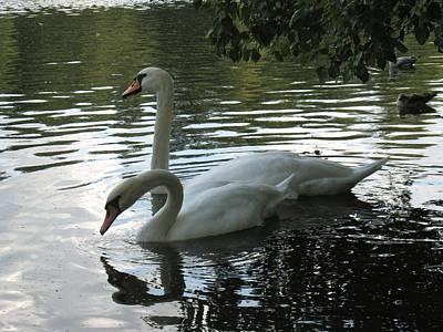 Photograph - Swans 1 by Sami Tiainen