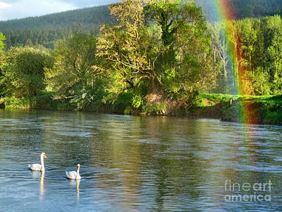 Swans And Double Rainbow 1 Art Print