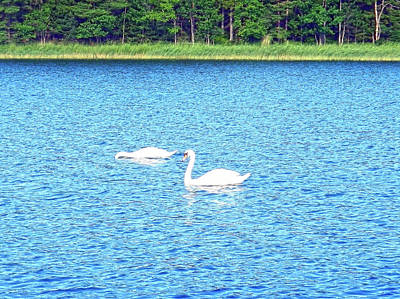 Photograph - Swans In Finland by Johanna Hurmerinta