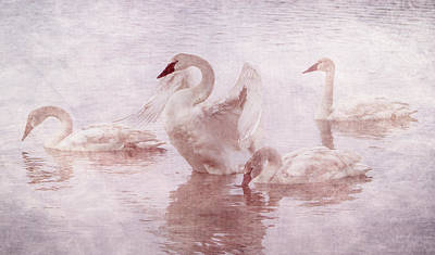Photograph - Swans In The Rosy Mist by Patti Deters