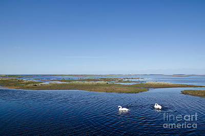 Photograph - Swans In Wetland by Kennerth and Birgitta Kullman