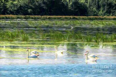 Photograph - Swans by John Freidenberg