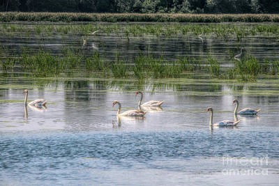 Photograph - Swans Lake by John Freidenberg