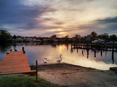 Photograph - Swans Of Chink Creek by Chris Montcalmo