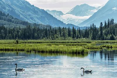 Photograph - Swans On Tern Lake by Belinda Greb