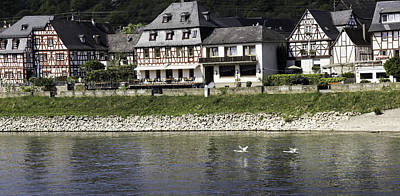 Flying Swan Photograph - Swans On The Rhine In Spay Germany by Teresa Mucha