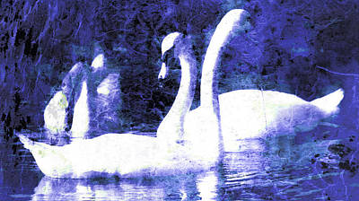 Art Print featuring the digital art Swans On Water  by Fine Art By Andrew David