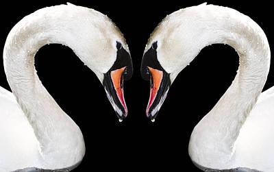 Free Mixed Media - Swans by Svetlana Sewell