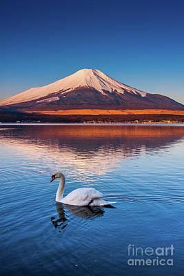 Photograph - Swany by Tatsuya Atarashi