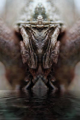 Photograph - Swamp Diva by WB Johnston