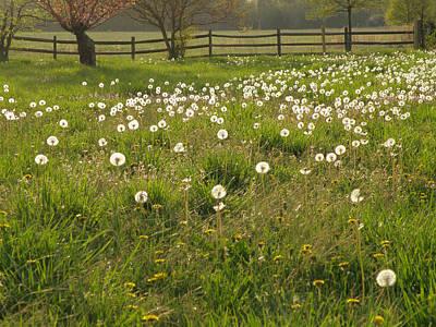 Swarming Dandelions Art Print