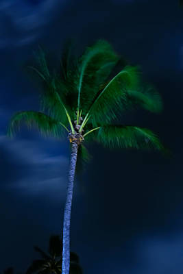 Photograph - Swaying Palm Tree by Roger Mullenhour
