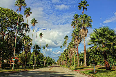Photograph - Swaying Palms by HH Photography of Florida