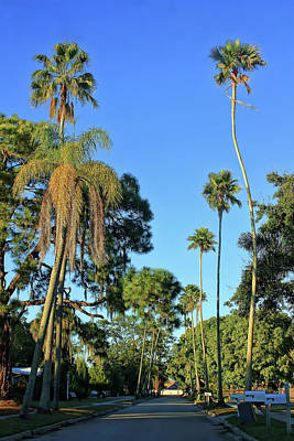 Photograph - Swaying Palms Two by HH Photography of Florida