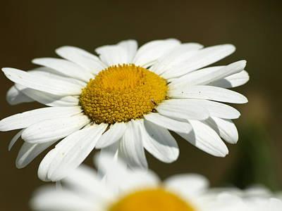 Photograph - Sweat Bee by DeeLon Merritt