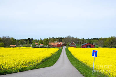 Photograph - Swedish Spring Landscape by Kennerth and Birgitta Kullman