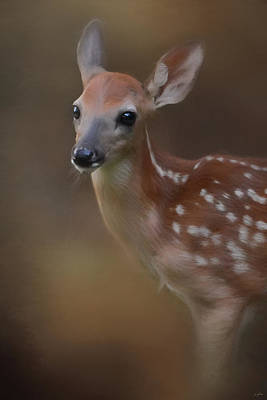 Photograph - Sweet And Spotted - Deer Art By Jai Johnson by Jai Johnson