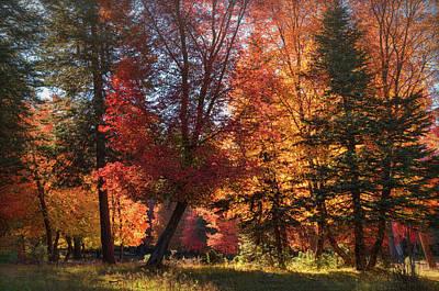 Photograph - Sweet Autumn Light  by Saija Lehtonen