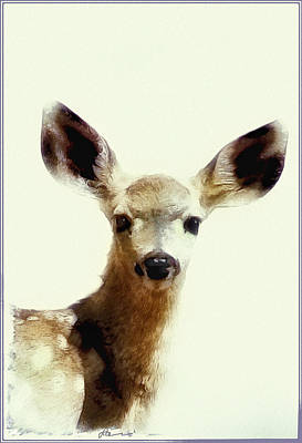 Big Ears Photograph - Sweet Baby Face by Lynn Andrews