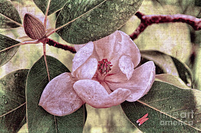 Photograph - Sweet Bay Magnolia After The Rain by Lois Bryan