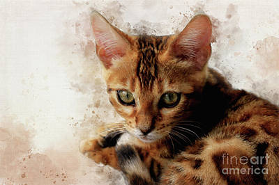 Digital Art - Sweet Bengal Kitten by Teresa Zieba
