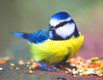 Photograph - Sweet Blue Tit by Georgiana Romanovna