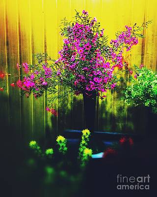 Photograph - Sweet Boronia by Blair Stuart