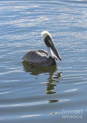 Photograph - Sweet Brown Pelican In Blue Water by Carol Groenen