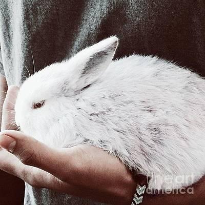 Sweet Photograph - Sweet Bunny Love by Sharon Mau