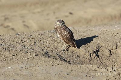 Photograph - Sweet Burrowing Owl by Carol Groenen
